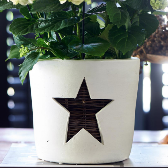 Winter Star Pot L
